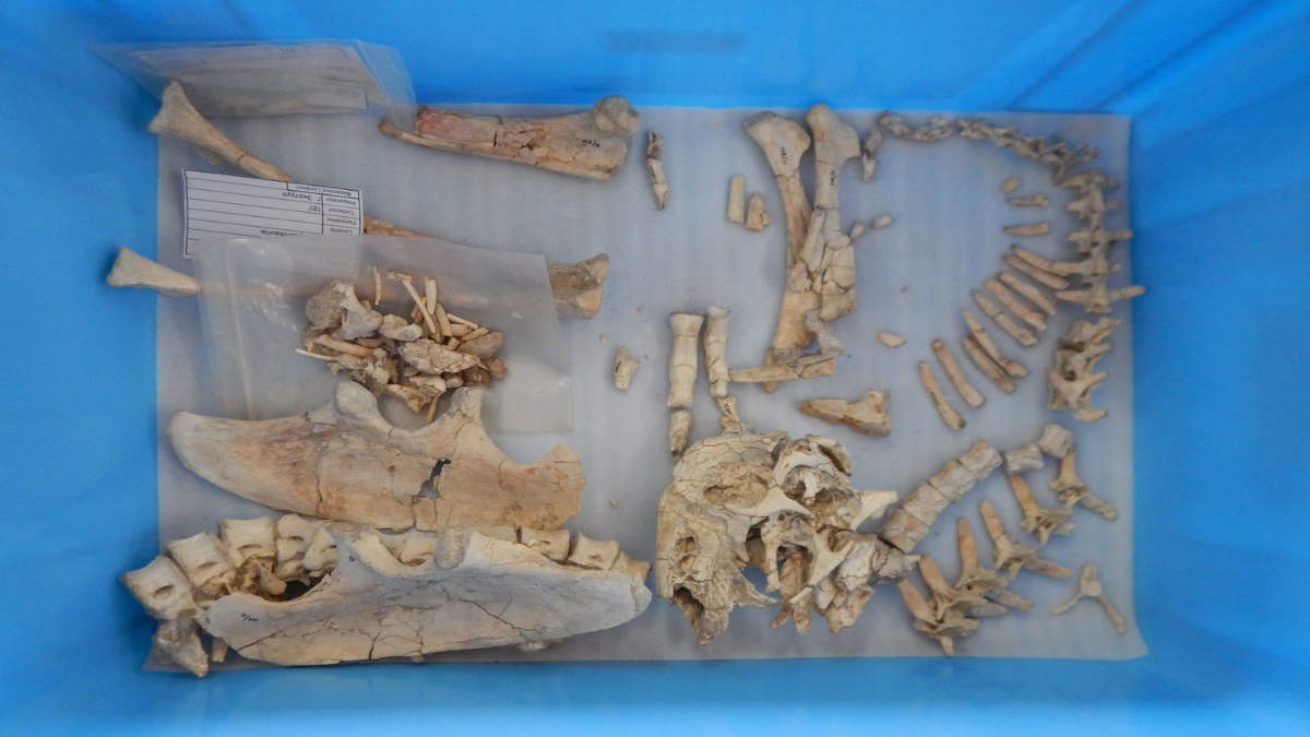 Scientists Discovered the Skeletons of a Strange Dinosaur, Resembling A Giant Parrot