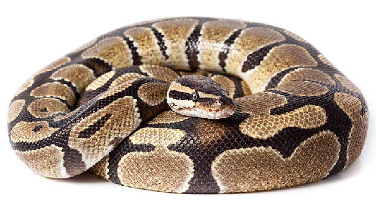 Why Exotic Pets Needs Legal Registration To Have Them Home?