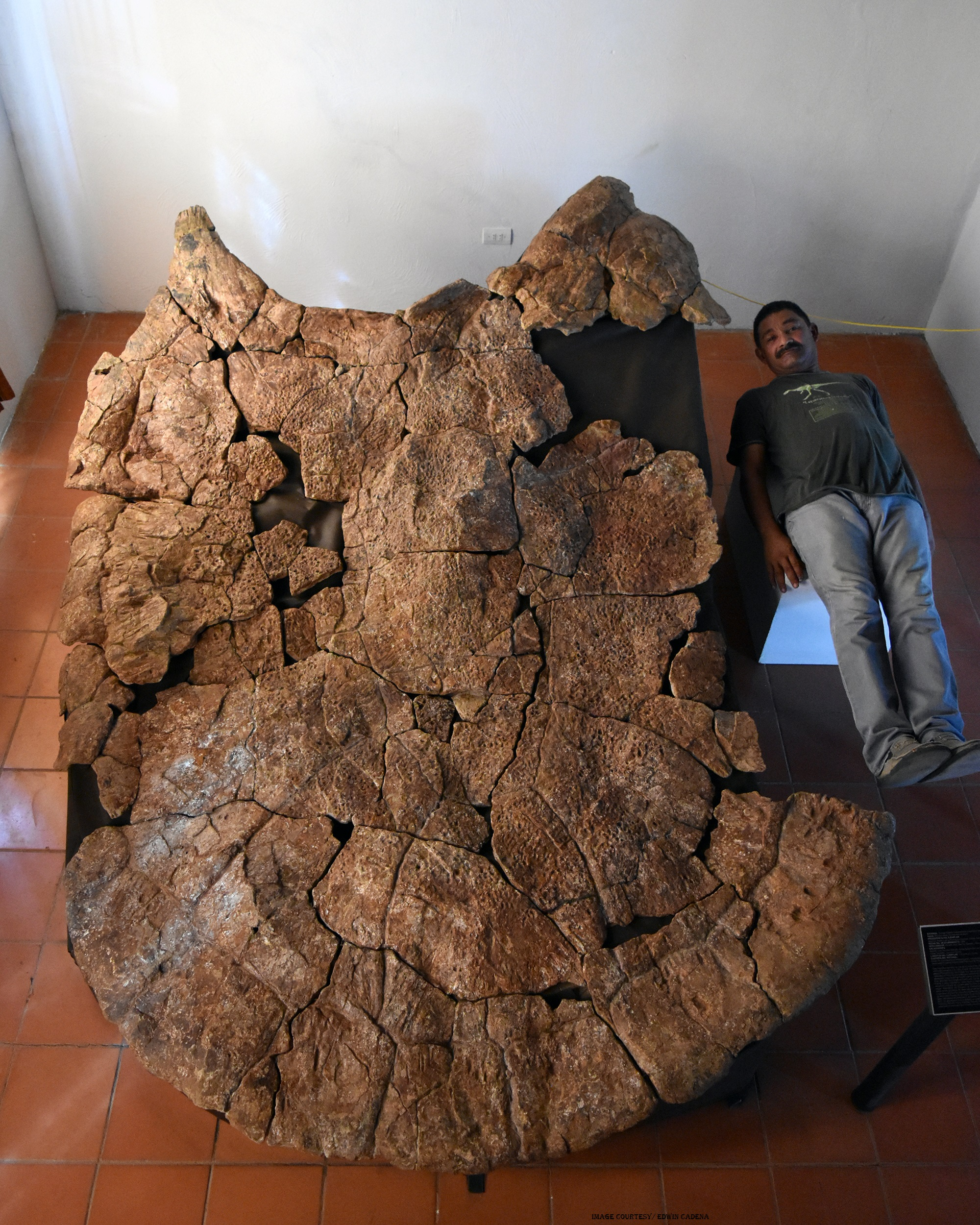 Remains of Stupendemys geographicus, the Giant Turtle, Unearthed in South America