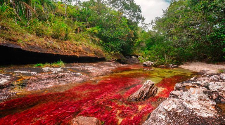 Cano Cristales The Liquid Rainbow River in Colombia