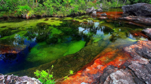 Cano Cristales The Liquid Rainbow River. Image lluis calonge