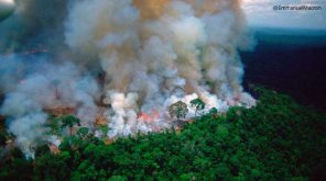 Lungs of Earth on Fire: Amazon rain forest up on smoke