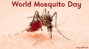 Mosquitoes Do Have A Day in Calendar - World Mosquito Day August 20