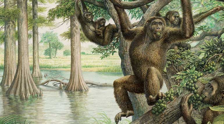 Human evolution redefined by findings of the 10 million years old fossil of Rudapithecus (Illustration courtesy of John Sibbick)