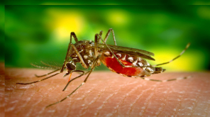 Tamil Nadu Counts 3900 People with Dengue including Children