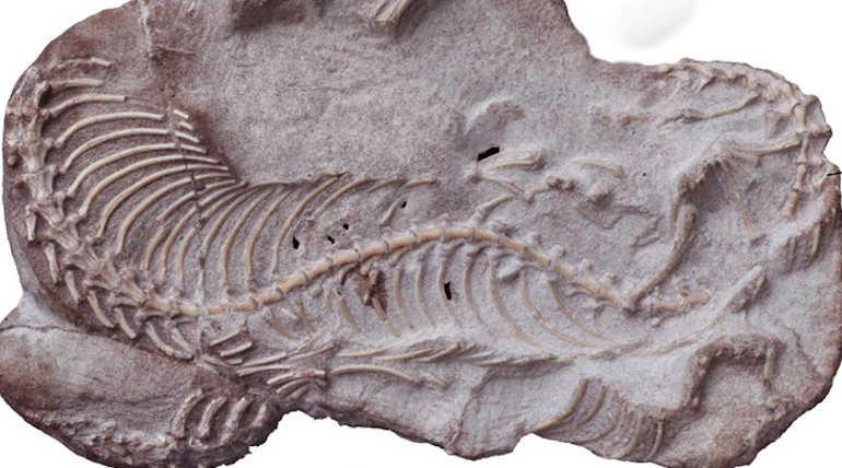Preserved Najash Snake Skull Reveals Evolution of Snakes Image Courtesy: LBPA