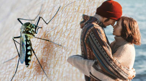 Sexually Transmitted Dengue Case Confirmed in Spain
