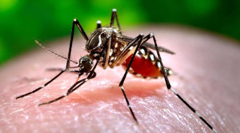 Malaria Carrying Mosquitoes Becoming Resistant to Insecticides