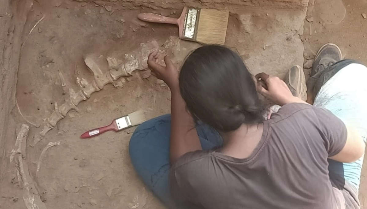 Bones of a large unknown animal unearthed at Keezhadi
