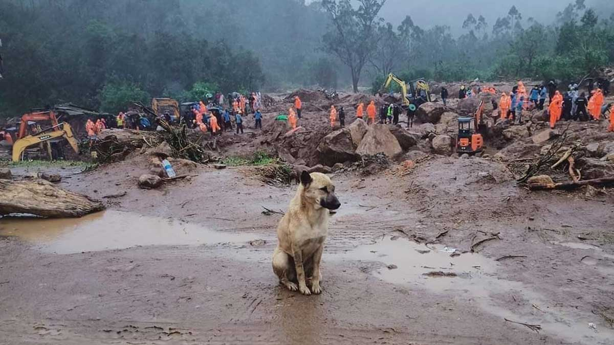 Dog in Munnar looking for their owners in landslide.