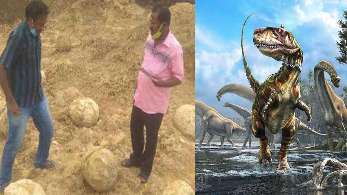 Dinosaur Eggs like Fossils Found near Perambalur District
