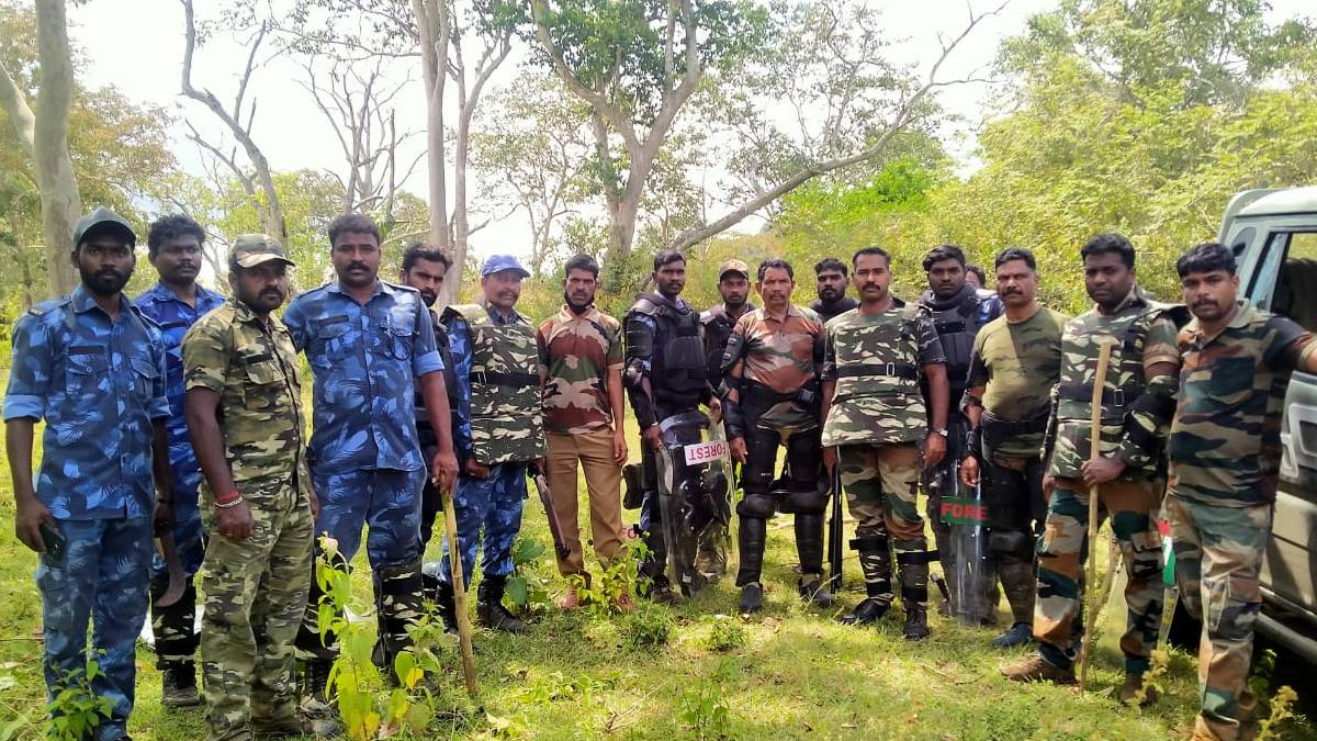 Expert Team To Shoot The Tiger